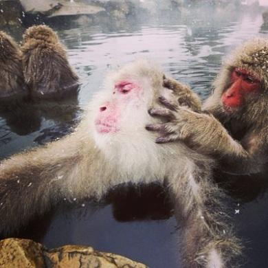 japan onsen swimming